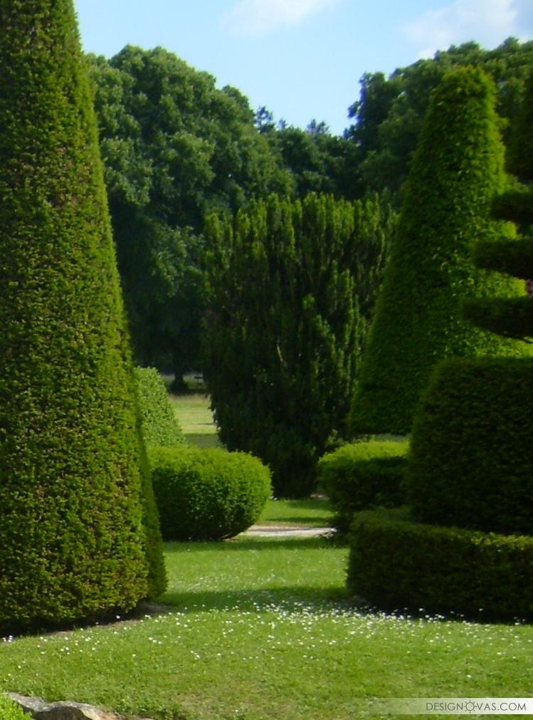 garden -317